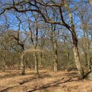 Eichenwald (oak wood) 01, Foto Klaus Kretschmer