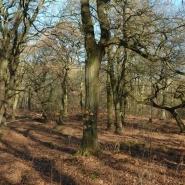 Eichenwald (oak wood) 07, Foto Klaus Kretschmer