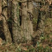 Eichenwald (oak wood) 03, Foto Klaus Kretschmer