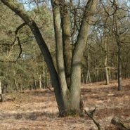 Eichenwald (oak wood) 09, Foto Klaus Kretschmer
