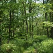 Eichenwald (oak wood) 04, Foto Klaus Kretschmer