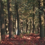 Eichenwald (oak wood) 05, Foto Klaus Kretschmer