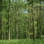Eichenwald (oak wood) 06, Foto Klaus Kretschmer