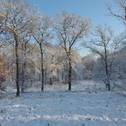 Eichenwald (oak wood) 02, Foto Klaus Kretschmer