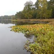 Uferbereich vor der Entschlammung, Foto: W. Itjeshorst