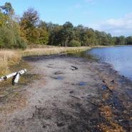 Verschlammter Uferbereich nach Senkung des Wasserspiegels, Foto: W. Itjeshorst