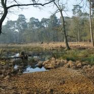 Rückbau von Entwässerungsgräben 3