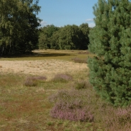 Sandmagerrasen (Neglected sand grassland) 03, Foto Klaus Kretschmer