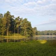 Heideweiher (heath mere) 03, Foto Hans Glader
