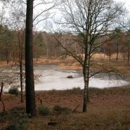 Heideweiher (heath mere) 04, Foto Klaus Kretschmer