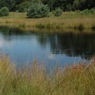 Heideweiher (heath mere) 06, Foto Klaus Kretschmer