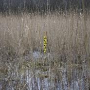 Pegel im Moor, Foto Jacqueline Meis