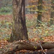 Diersfordter Wald 01, Foto Hans Glader