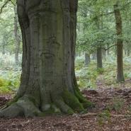 Diersfordter Wald 02, Foto Hans Glader