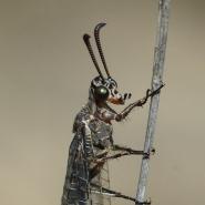 Ameisenjungfer (Ant lion), Foto Klaus Kretschmer